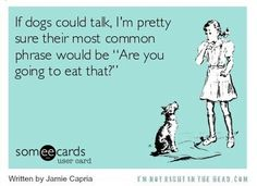 What would your #dog say to you?