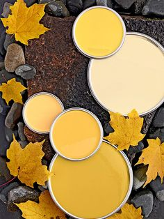 Go to the richer side of yellow with these maple gold hues. Golden yellows…