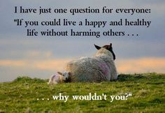 Why don't you stop eating lamb? Let's leave these babies alone. *~❤•❦•:*´`*:•❦•❤~*