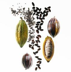 De la vaina al nib de cacao