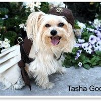LPD 007 - Little Pampered Dog - PupScouts with Susan (and Tasha) Godwin by Little Pampered Dog on SoundCloud. So cute I can barely stand it!!! <3