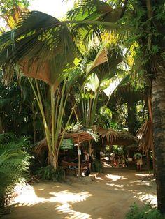 Valle De Mai. Seychelles