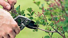 Pruning Basics http://www.gardendesignbytiz.com/blog/2016/3/1/pruning-basics