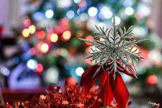 Teresa Fndz Photography:  Merry Christmas