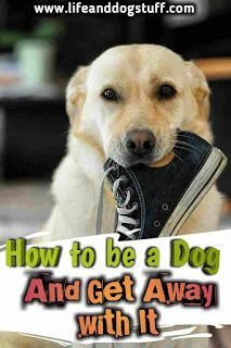 Best Dogs Breeds For Kids Top 10 Families 66 Ideas Best Dogs For Kids, Best Dogs For Families, Top 10 Dog Breeds, Best Dog Breeds, Funny Dog Memes, Funny Dogs, Hilarious Animals, Pet Memes, What Kind Of Dog