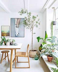 green indoor plants in modern dining room via domino./ sfgirlbybay