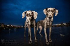 Fotógrafa Kaylee Greer, Dog Breath Photography
