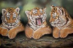 wildlife-painting-tiger-Kat-Davies