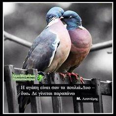 Η αγάπη είναι σαν τα πουλιά. Δυο – δυο. Δε γίνεται παραπάνω  #μενέλαος #λουντέμης #greek #greekquotes #greekposts #quotes #ποίηση #λουντεμης #αγάπη
