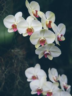 Orchids by North Sky Photography