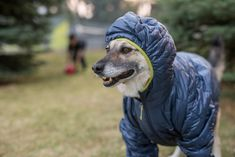 First Look: Patagonia Micro Puff Hoody – The Alpine Start