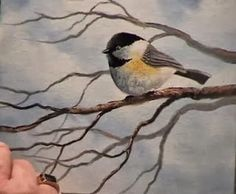 Intermediate to advanced oil painting techniques from Wilson Bickford showing how to paint a pudgy little Chickadee sitting on a winter. Oil Painting Techniques, Painting Lessons, Art Techniques, Tole Painting, Painting & Drawing, Drawing Tips, Watercolor Bird, Watercolor Paintings, Watercolours