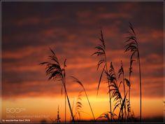 Gras Under A Wide Sky by buma. @go4fotos