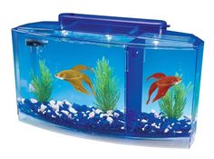 Betta Fish Tank With Divider Triple Beta Tank Deluxe With Filtration System