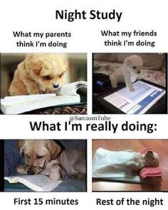 New Funny Jokes Humor Teachers Ideas New Funny Jokes, Jokes Pics, Funny School Jokes, Funny Qoutes, Super Funny Quotes, Crazy Funny Memes, Funny Relatable Memes, Funny Facts, Funny Dogs