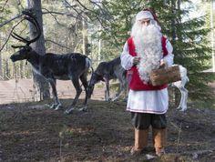 Santa Claus feeding his reindeer in summer time in Santa Claus Reindeer resort in Rovaniemi