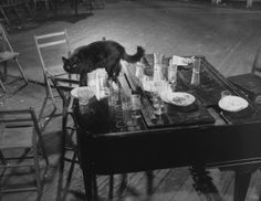 Gjon Milis cat Blackie steps gingerly among empty glasses left on top of the piano after an all-night jam session at his studio, 1942.