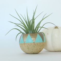 Air Plant Planter with Air Plant - Aqua & Gold Triangles on Etsy, $18.34 AUD