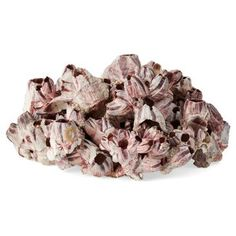 """Check out this item at One Kings Lane! 15"""" Barnacle Cluster, White/Purple"""