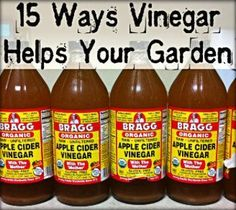 Get Rid of Deer, Rabbits, Racoons, and Cats: These animals hate the smell of vinegar and it will keep them out of your garden naturally and safely. It is best to...: