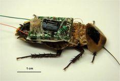 Las cucarachas cibernéticas causan controversias por el maltrato animal - http://felixjtapia.org/blog/2013/10/09/las-cucarachas-ciberneticas-causan-controversias-por-el-maltrato-animal/