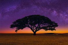 árbol de la sabana africana