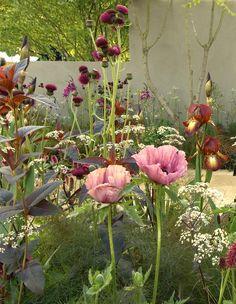 Cirsium rivulare, Papaver, and Iris, Sarah price gardens.
