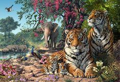 Tiger Sanctuary Photograph  - Tiger Sanctuary Fine Art Print - by Steve Read