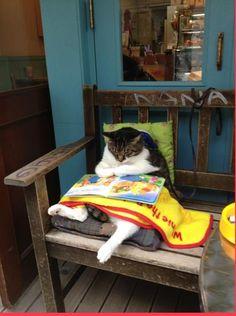 The literary kitten ...