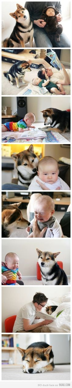 "Seeing this shiba so watchful of the baby reminds me of our 1st of 3 rescue akitas, Bear.  When my 16 yr old was born, if I didn't hear him cry, in shower or vacuuming, etc. Bear would come and find me and give me this look like ""Go get your baby and see what he wants, hurry!"" We miss you, Bear Akita, I Love Dogs, Best Dogs, Shiba Inu Colors, Cute Puppies, Cute Dogs, Dogs And Puppies, Doggies, Baby Animals"