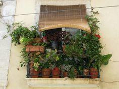 Garden in the window