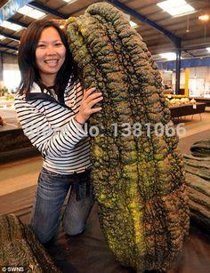 10pcs/bag rare bean seeds, giant plant seeds, garden decoration vegetable seeds #Affiliate