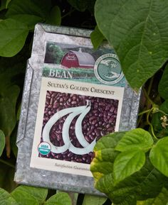 5 Non-GMO Seed Companies to Plant in Your Monsanto-Free Garden