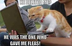 Funny Animal Pics Of The Day – Wackyy Picdump 6 Here is a collection of funny animal pics of the day Wackyy animal picdump If you are an animal lover and looking for animal humor, then you like these funny animal pics and memes of the day. Cute Memes, Funny Animal Memes, Funny Cat Videos, Funny Cats, Funny Memes, Hilarious Animals, Dog Memes, Funny Animals With Captions, Funny Captions