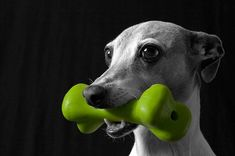 Some dogs like to chew more than others, so it is important to give your chewer (or chewers!) appropriate items to gnaw on. Dog Chew Toys, Pet Toys, Elk Antlers, Interactive Toys, Pet Search, Pet Supplies, Your Pet, Pets, Dog Toys