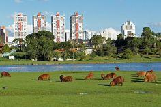 Parque Birigui - Curitiba/PR