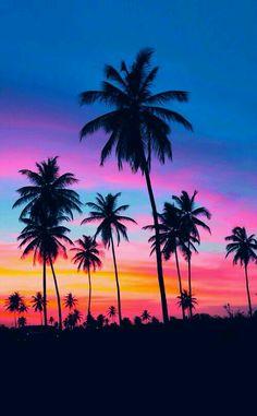 Пальмы, небо, лето