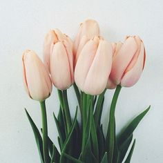 peachy pink tulips