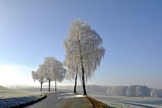 Winterlandschaft, Winter