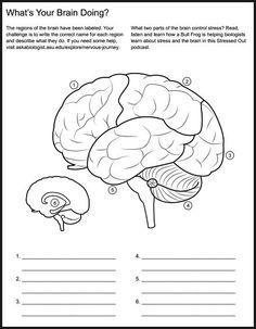 Christian Home School Hub - Brain Nervous System Neuroscience Teaching Materials