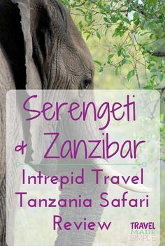 You'll want to hop on the next plane to Africa to see the Serengeti, Ngorongoro Crater and Zanzibar after reading this Intrepid Tanzania Safari tour review.