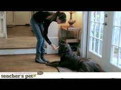 HOW TO STOP YOUR DOG FROM BEGGING:  In Teacher's Pet, Victoria Stilwell shows you how to employ her Positively Method to train your dog the right way, growing your level of communication to strengthen the bond between you and your pet.