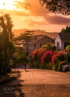 Serge Ramelli, Hollywood Hills houses and someone jogging, Outdoor Photography, Landscape Photography, Travel Photography, Beautiful Homes, Beautiful Places, Amazing Places, Hollywood Hills Homes, Sunset Landscape, House On A Hill