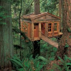 The World's Most Amazing Treehouses