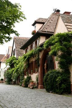 Edenkoben, Rhineland-Palatinate, Germany ✯ ωнιмѕу ѕαη∂у