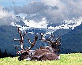 Molting Reindeer by Kate Hubbard