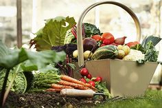 Now There's a Wikipedia-Style Gardening Site That Can Teach a Novice to Grow Anything