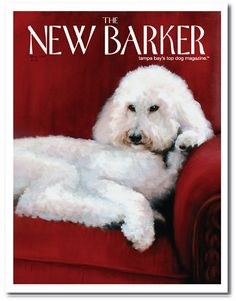 Savannah the Poodle by Lynn Parrish #poodle #magazine #magazinecover #cover