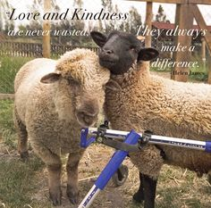 """Inspirational Quote of the Week: """"Love and kindness are never wasted, they always make a difference.""""- Helen James @santuarioigualdad_en"""