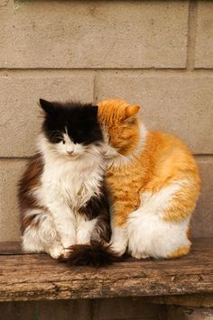 kitty cat love twins keeping warm Pretty Cats, Beautiful Cats, Animals Beautiful, I Love Cats, Crazy Cats, Cool Cats, Kittens Cutest, Cats And Kittens, Baby Animals